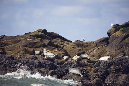 low angle views: Focas bronceaba sobre el litoral