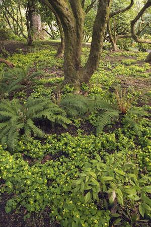 craig tuttle: Forest floor