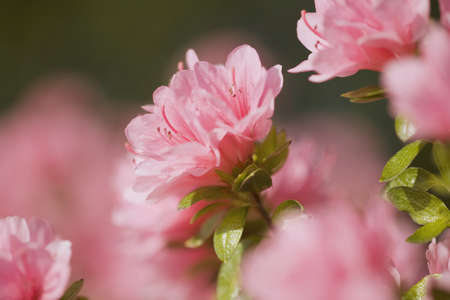 craig tuttle: Pink flowers Stock Photo