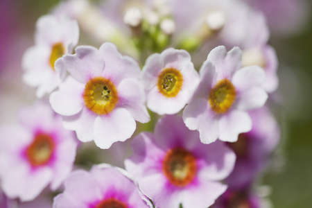 tuttle: Soft focus of flowers