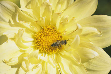 craig tuttle: Close-up of bee on flower