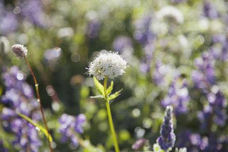low angle views: Flores de color p�rpura