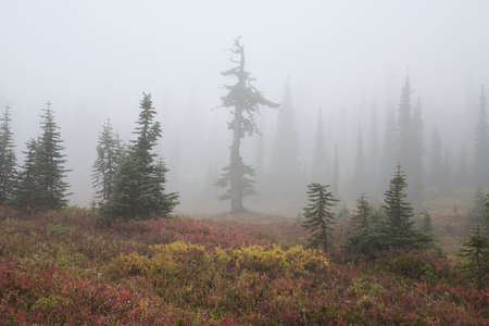 tuttle: Foggy forest