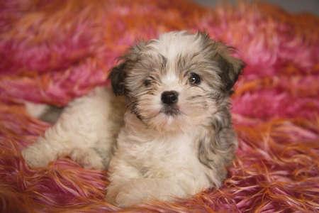 Portrait of puppy Stock Photo - 7195740
