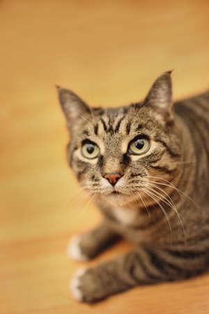 warkentin: Portrait of a cat