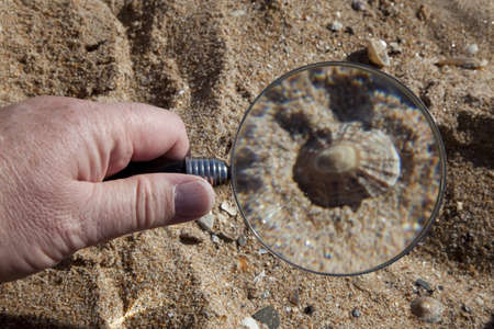Seashell seen through a magnifying glass, Low Newton by the Sea, Northumberland, England