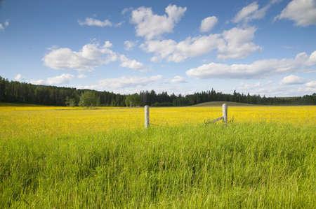 Rural fence in prairies, Manitoba, Canada Stock Photo - 7206743