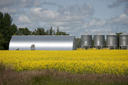 Metallic grain storage units, Manitoba, Canada Stock Photo - 7195249