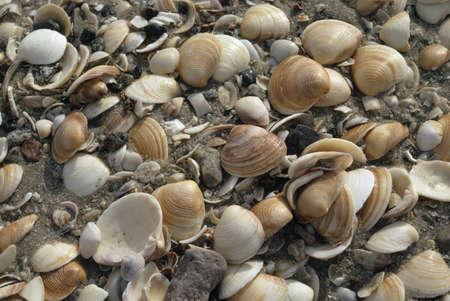 oceanfront: Seashells clustered on beach, Baja, Mexico