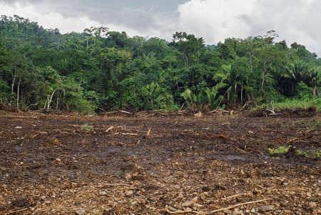 deforestacion: Bosque tropical despachada por maquinaria, Belice Foto de archivo