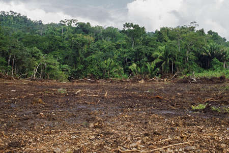 deforestation: Tropical forest cleared by machinery, Belize