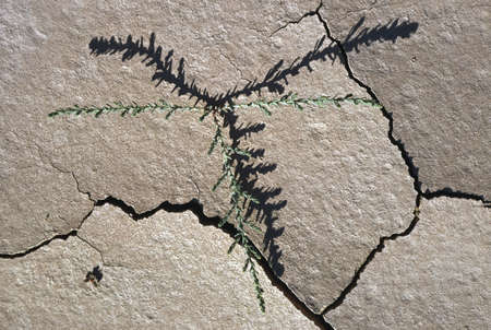 fits in: Shadow of small desert plant fits with cracks in dried mud