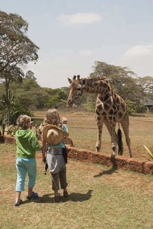 caucasian ancestry: Children looking at Rothschild giraffe, Nairobi, Kenya, Africa