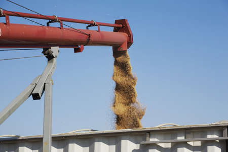 Loading harvested wheat into truck, Alberta, Canada Stock Photo - 7190212