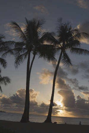Silhouette of palm trees at sunset, Kauai, Hawaii, USA Stock Photo - 7190404