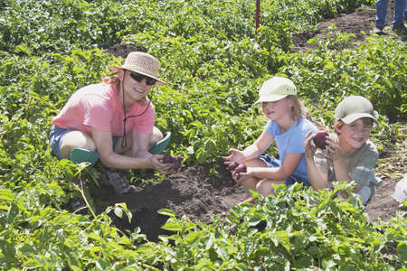 caucasian ancestry: Family picking strawberries Stock Photo