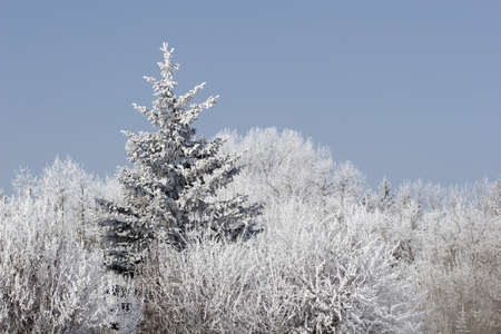 frost on trees Stock Photo - 7191440