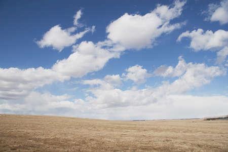 alberta, canada; wheat field and clouds Stock Photo - 7189901
