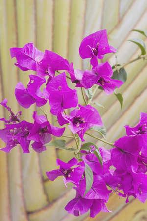 tropical flowers and palm, maui, hawaii, usa photo