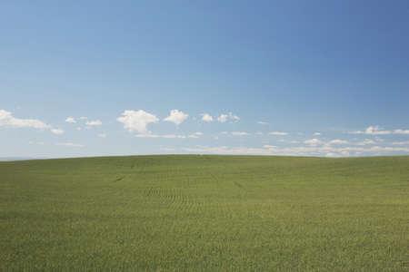Green wheat field Stock Photo - 7191050