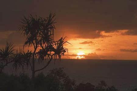 lake fronts: palm tree near the pacific ocean, north kauai, hawaii, usa