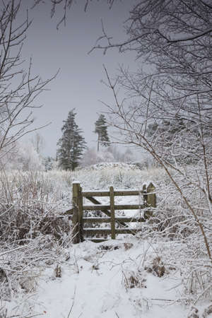 winter landscape with trees and a wooden fence Stock Photo - 7192145