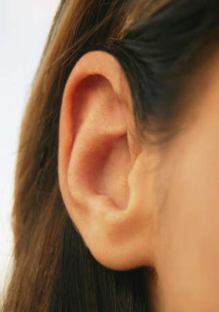 auditory: An ear