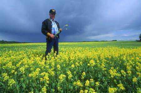 Farmer inspecting the crop