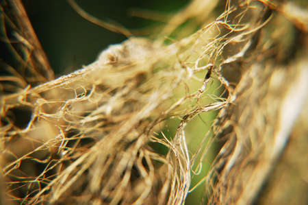 fibrous: Close up of plants root system Stock Photo