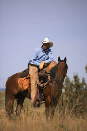working cowboy: Cowboy and horse Stock Photo