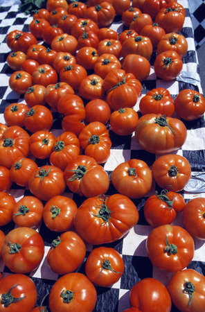 pinchbeck: Harvested Tomatoes Stock Photo
