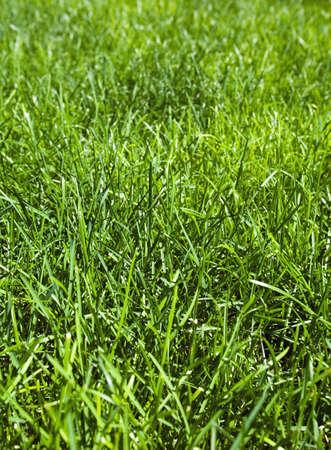 raniszewski: Green grass