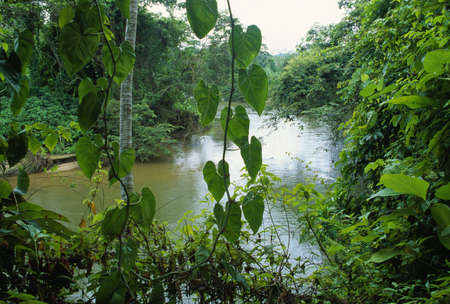 Rainforest in Belize 版權商用圖片