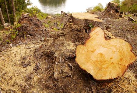 Cut tree Stock fotó - 7192051