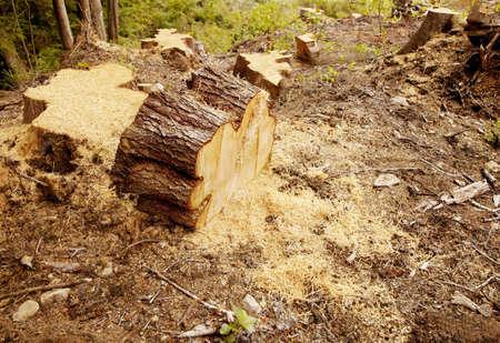 environmental issues: Tree stumps