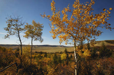 glubish: Scenic landscape Stock Photo
