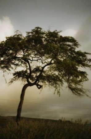glubish: Tree and stormy sky
