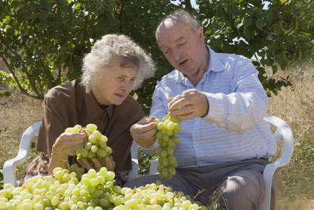food inspection: Grape orchardists in Spain