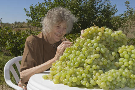Grape orchardist in Spain photo