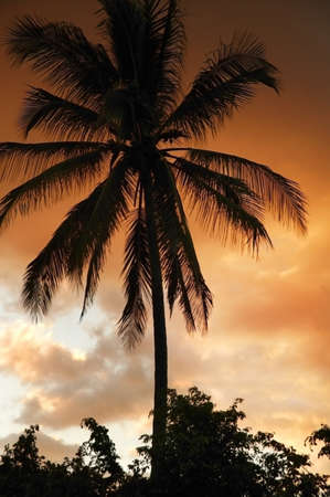 glubish: Silhouetted palm tree