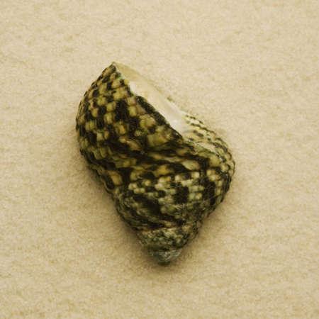 Seashell Stock fotó
