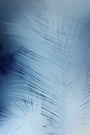 Palm branch background Stock Photo
