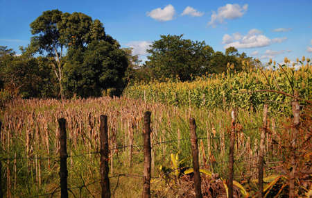 glubish: Stick fence in a rural area Stock Photo