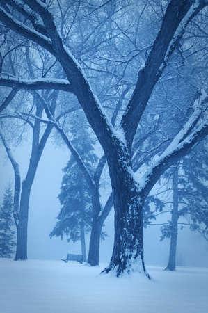 Monotone winter scene photo