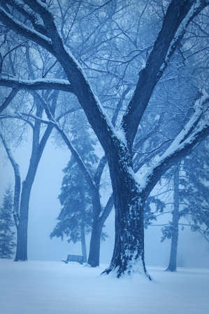 monotone: Monotone winter scene Stock Photo