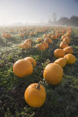 sean: Pumpkin patch