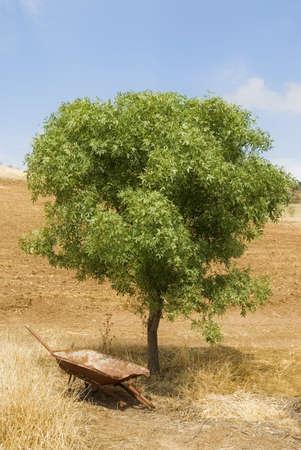 disuse: Disused wheelbarrow under a tree