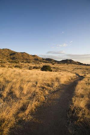 raniszewski: Path in high desert foothills