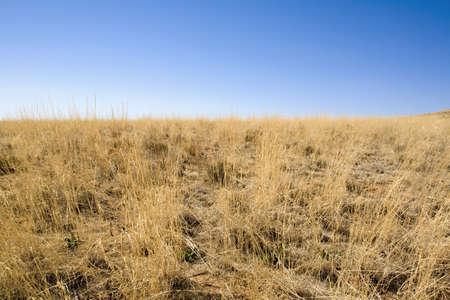 raniszewski: Desert grass