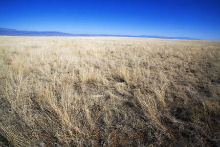 raniszewski: Desert grass with mountains in the distance
